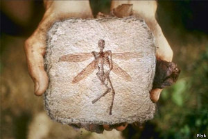 arsheolog